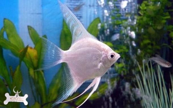 Для аквариума картинки